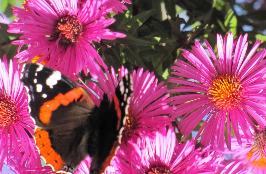 Astern mit Schmetterling